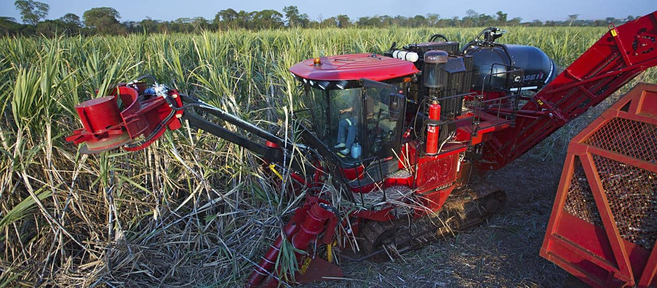Latest Austoft food for thought for sugarcane farmers