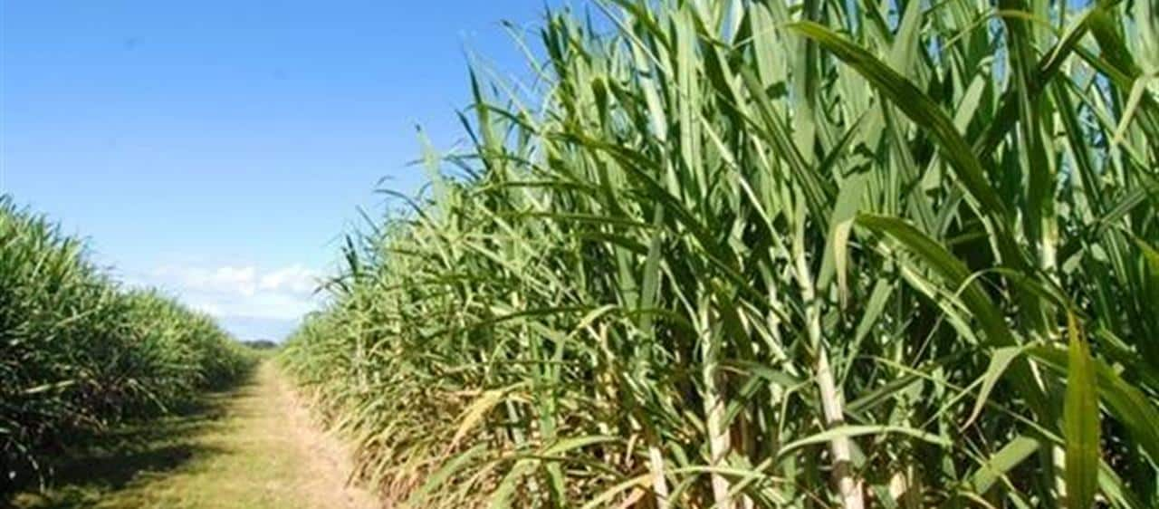 Future of sugar industry the focus of two-day Queensland conference