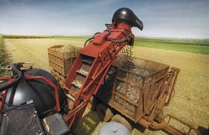 Sugar Cane Harvester 8000 Series-Precision and control in harvesting