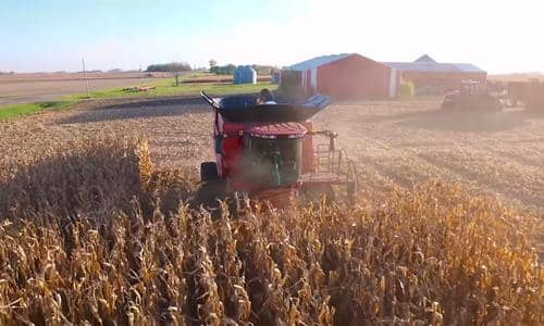 Producers Experience: The Case IH Narrow Row Corn Head
