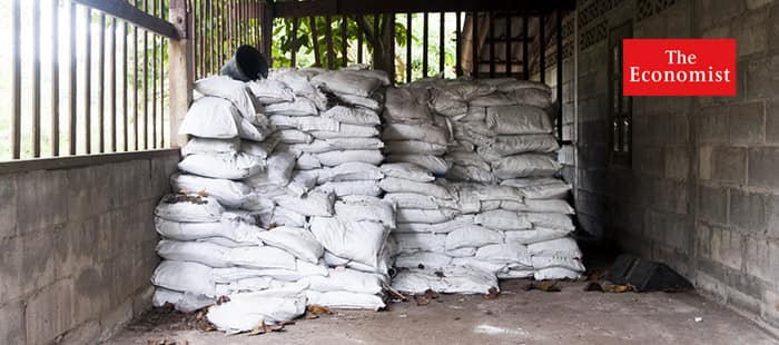 Lost in the maize: Why fertiliser subsidies in Africa have not worked