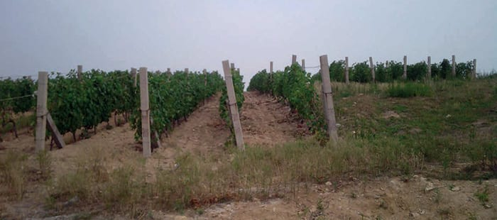 grapevine-crop-protection