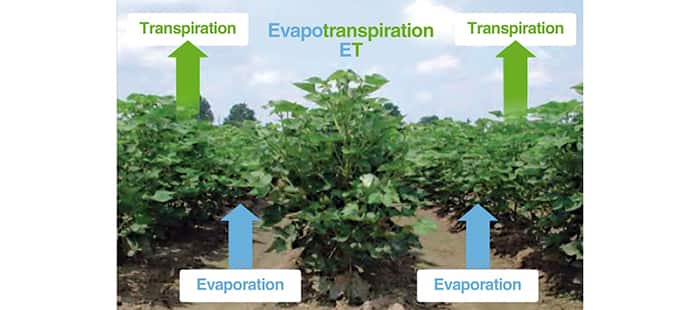 irrigation-evapotranspiration.jpg